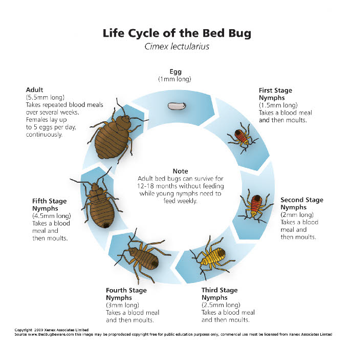 Image Result For Treating Bed Bugs